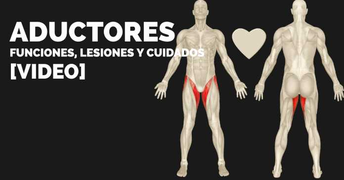 ADUCTOREs